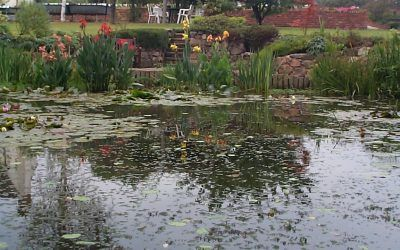 How do I plant up an earth-based pond or lake?