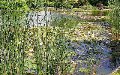 How many plants do I need for planting my pond?