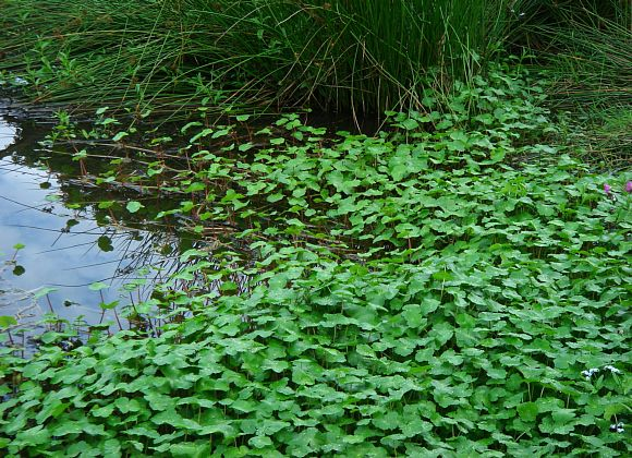Invaders to avoid – Banned invasive plants